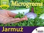 Microgreens - Jarmuż nis. zielony, kędzierzawy 3g