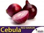 Cebula czerwona Red Baron (Allium cepa) 1g