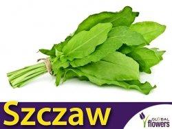 Szczaw LYOŃSKI (Rumex acetosa) nasiona 2g