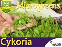 Microgreens - Cykoria liściowa 3g