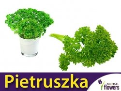 Pietruszka naciowa 'Festival 68' (Petroselinum crispum) XXL 500g