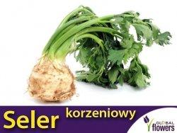 Seler korzeniowy Makar (Apium graveolens) 1 g