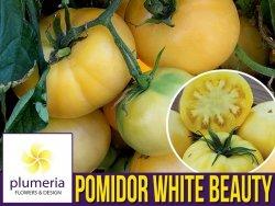 Pomidor WHITE BEAUTY gruntowy wysoki (Solanum lycopersicum) nasiona 0,2 g