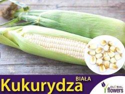 Biała Kukurydza nasiona