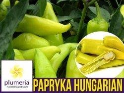Papryka Ostra HUNGARIAN YELLOW wax hot  (Capsicum annuum) 0,5g nasiona LUX