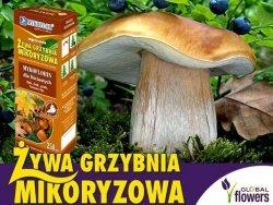 Grzybnia Grzyby Leśne Drzew Liściastych Mikoryza op. Xl 2 litry