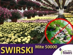 SWIRSKI MITE 50000 drapieżny roztocz (do zwalczania wciornastków) 500ml
