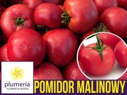 Pomidor MALINOWY OŻAROWSKI  (Solanum lycopersicum) nasiona 0,5g