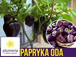 Papryka Fioletowa ODA (Capsicum annuum) nasiona 0,5g