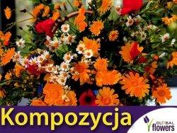 Kompozycja Pomarańczowych Roślin Jednorocznych 1g nasiona