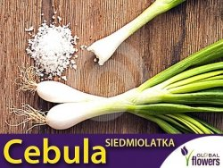 Cebula siedmiolatka (Allium fistulosum) 2g