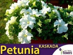 Petunia ogrodowa Kaskada biała (Petunia x hybrida pendula) 0,02g LUX