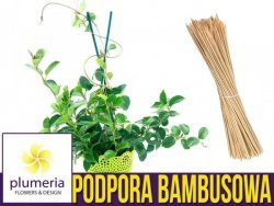 Podpora do roślin (tyczka bambusowa) Bambus łupany naturalny 35cm/4mm. 10 szt.