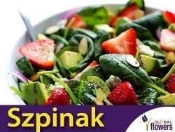 Szpinak Warzywny MATADOR (Spinacia oleracea) nasiona 10g