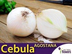 Cebula biała Agostana (Allium cepa) XXL 500g