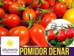 Pomidor DENAR Polska Nowość (Lycopersicon Esculentum) nasiona 0,5g