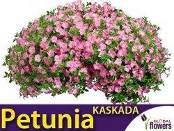 Petunia ogrodowa Kaskada różowa  (Petunia x hybrida pendula) 0,02g LUX
