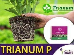 TRIANUM P pożyteczny grzyb na choroby glebowe (w proszku)
