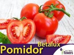 Pomidor BETALUX karłowy (Lycopersicon Esculentum) nasiona 1g
