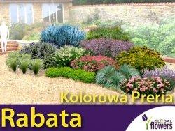 Rabata Kolorowa Preria - Gotowy projekt ogrodu na 15m2 (BEZ SADZONEK)