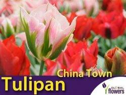 Tulipan Viridiflora 'China Town' (Tulipa) 4 szt CEBULKI