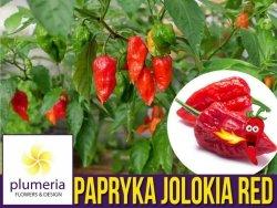 Papryka ostra BHUT JOLOKIA RED (Capsicum chinense x f.) nasiona