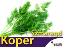 Koper ogrodowy. Szmaragd (Anethum graveolens) nasiona 5g