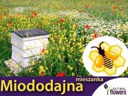Mieszanka bylinowa roślin miododajnych na TERENY SUCHE- nasiona XXL 100g
