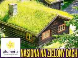 Zielony dach NASIONA TRAW - mieszanka nasion 100g