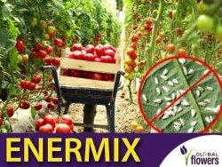ENERMIX dobrotnica szklarniowa (Encarsia formosa) + osiec mączlikowy (Eretmocerus eremicus)