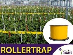 ROLLERTRAP Żółta taśma lepowa do monitoringu skuteczności 100m