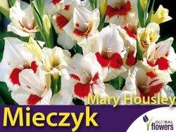 Mieczyk wielokwiatowy 'Mary Housley' (Gladiolus) Cebulki 5 szt.