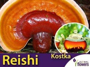 Reishi - lakownica lśniąca (Ganoderma lucidum) KOSTKA do uprawy domowej 3 kg