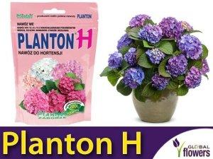 PLANTON® H nawóz do Hortensji bukietowych i ogrodowych. 200g