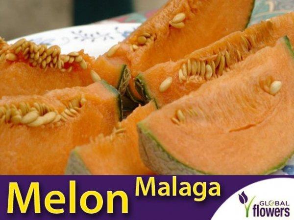 melon malaga nasiona