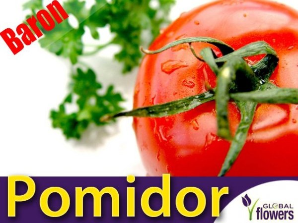 Pomidor Baron F1 odporny, pod osłony (Lycopersicon Esculentum)