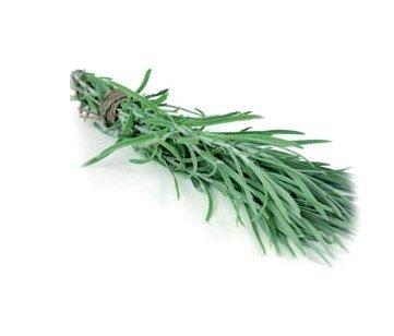 Kocanka włoska świeże zioła