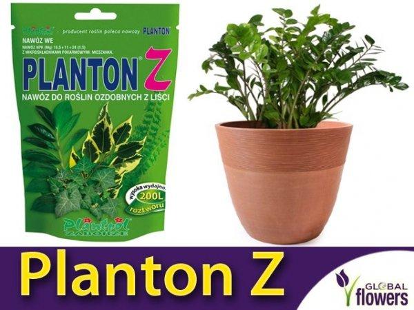 Planton Z