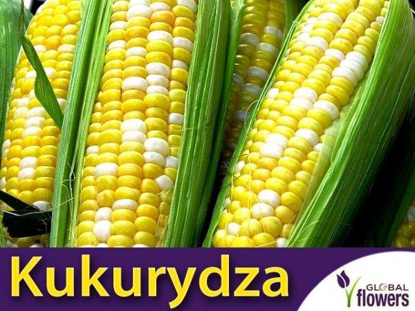 Kukurydza cukrowa Ramondia F1 żółto-biała