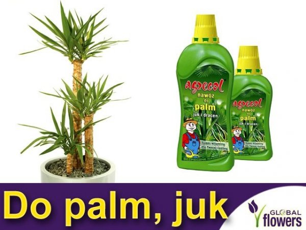 Agrecol Nawóz do palm, juk i dracen 0,75L