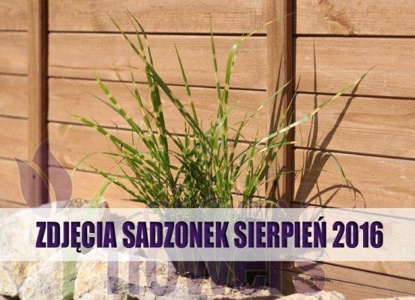 Trawy ozdobne uprawa w ogrodzie