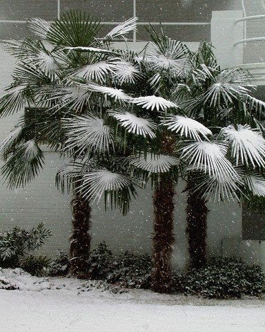 Palma- ozdoba każdego nowoczesnego ogrodu