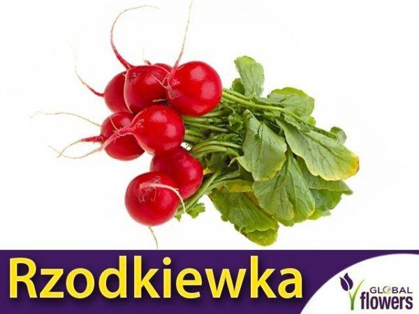 Rzodkiewka Saxa 2 o kulistych zgrubieniach