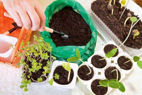 Starter do wysiewu i sadzenia - uniwersalny zestaw 4 produktów do rozsad Z17