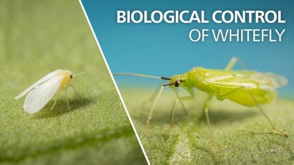 biologiczna ochrona roślin, ekologiczna ochrona roślin