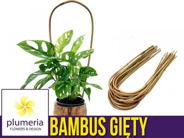 Bambus gięty podpora do roślin w doniczkach