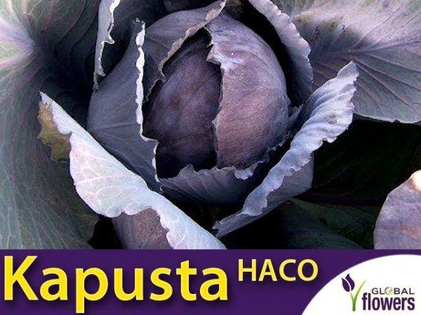 Kapusta czerwona Haco (Brassica oleracea convar. capitata var. rubra) XL 50g
