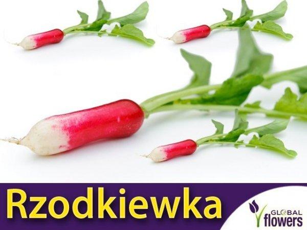 Rzodkiewka Opolanka (Raphanus sativus) podłużne zgrubienia