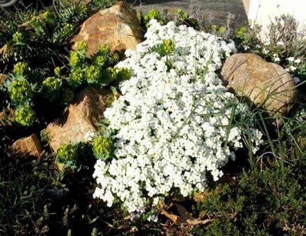 Cudowne białe kępki