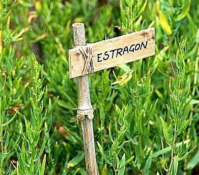 Estragon (Artemisia dracunculus) 0,1g